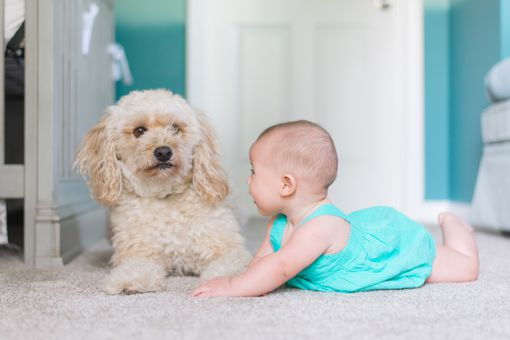 Dog and Baby on Carpet